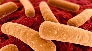 Болезнетворные бактерии