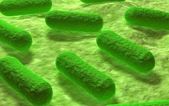 Бактерии грам-отрицательные и положительные