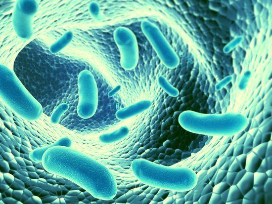 Бактерии для кишечника