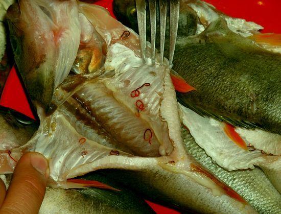 Рыбьи глисты