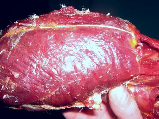Паразиты в мясе