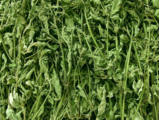 Сухие травы против грибка