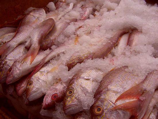 Замороженная рыба от печеночной двуустки