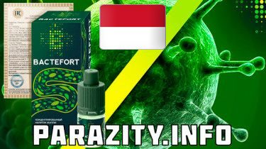 Moringa for Indonesia