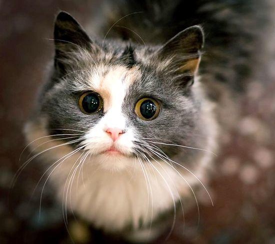 Фото котенка крупным планом